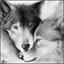 Werewolfka